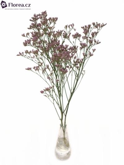 LIMONIUM SAFORA ROSY PINK 50cm/25g