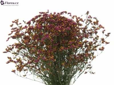 LIMONIUM SINENSIS CHINA RED 35g
