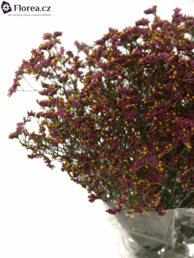 LIMONIUM SINENSIS CHINA RED 50cm/20g