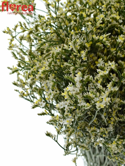 LIMONIUM SINENSIS CHINA WHITE 50cm/30g