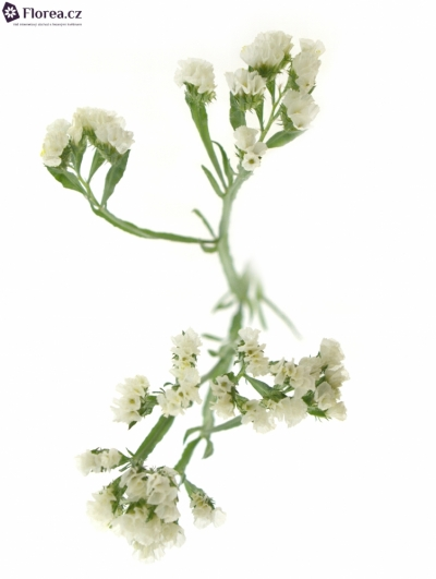 LIMONIUM SINUATUM STARLIGHT WINGS 30g