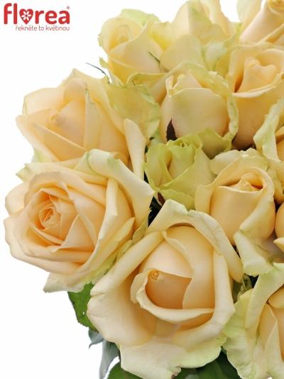 Meruňková růže AVALANCHE PEACH+ 70cm