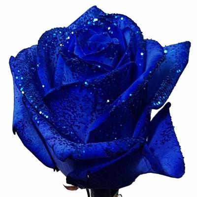 ROSA BLUE VENDELA BLUE GLITTERS 70cm (M)