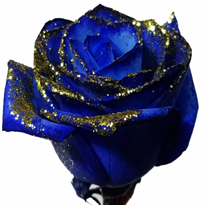 ROSA BLUE VENDELA GOLD GLITTERS 60cm (M)