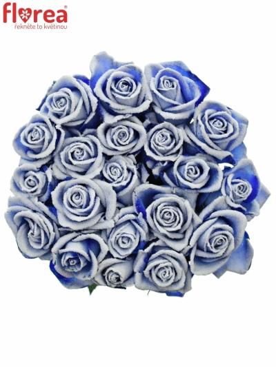 Modrá růže BLUE VENDELA + SILVER GLITTERS