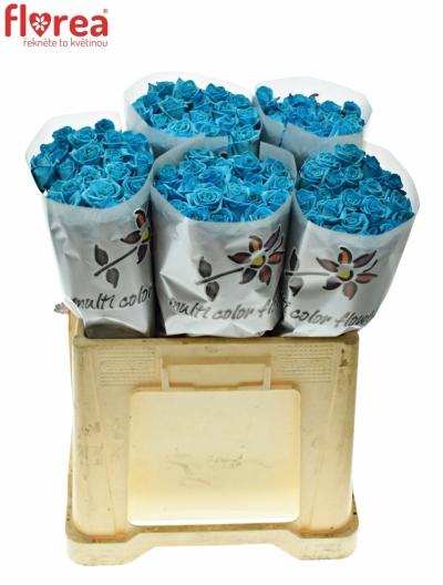 ROSA LIGHT BLUE VENDELA - MODRÁ RŮŽE 80cm (M)