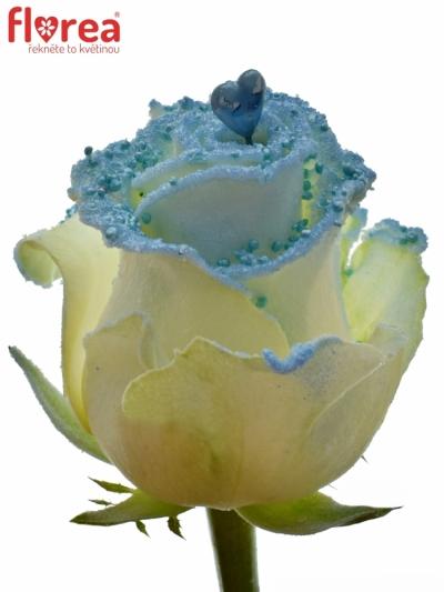ROSA PEARL BLUE LOVE 60cm (R 234)