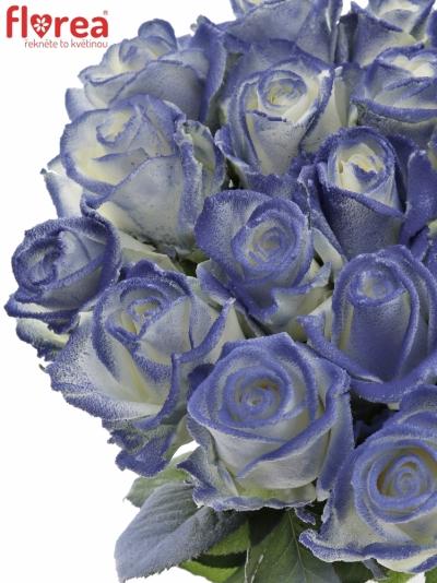 ROSA MARSHMALLOW BLUE 60cm (R44)