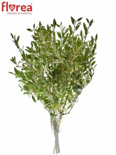Olivovník 300g