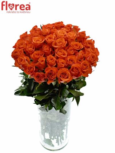 Oranřová růže PATZ 60cm (M)