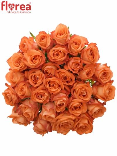 Oranžová růže  COPACABANA 50cm (L)