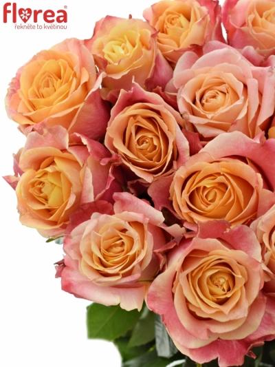 Oranžová růže 3D 60cm