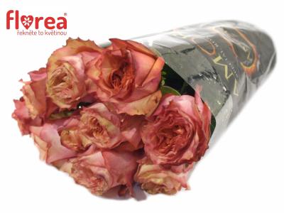 ROSA ADVANCE ALHAMBRA 60cm