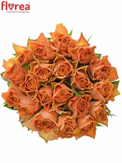 Oranžová růže ARANCIO
