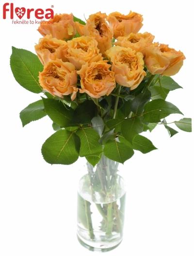 Oranžová růže CARALUNA 60cm