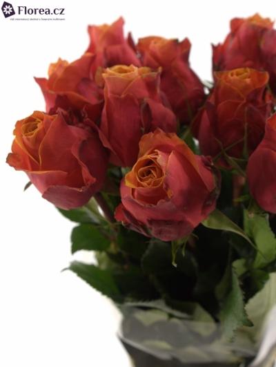 Oranžová růže CHERRY BRANDY