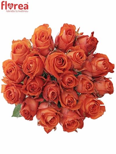 Oranžová růže DUTCH BEAUTY! 70cm