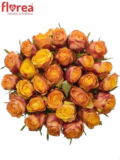 Oranžová růže GRANADA 60cm