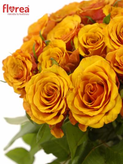 Oranžová růže JULIA 50cm (S)