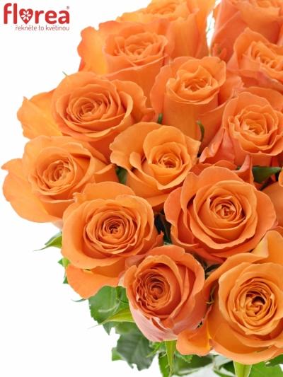 Oranžová růže KINGSDAY+ 50cm (L)