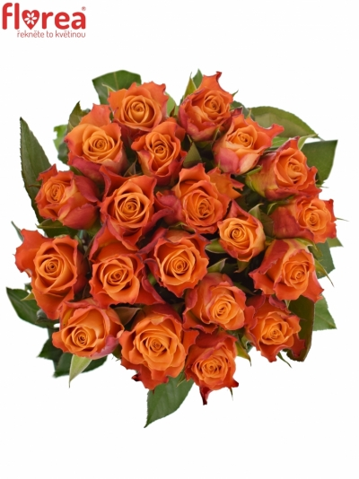Oranžová růže MARIYO!