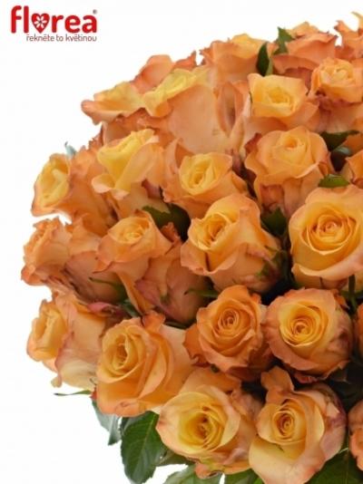 Oranžová růže MONALISA+ 50cm (L)