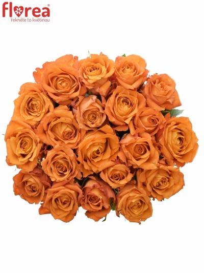 Oranžová růže MPESA 40cm