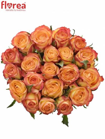 Oranžová růže OUTLAW! 50cm