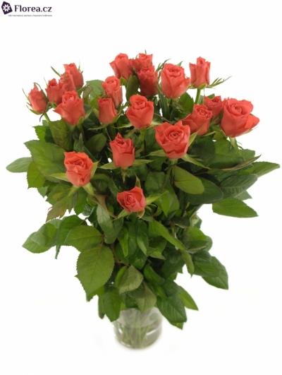 Oranžová růže PUNCH
