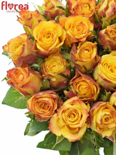 Oranžová růže SOMBRERO 70cm (XL)