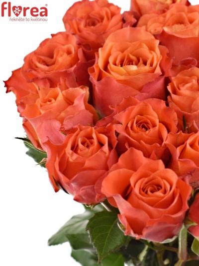 Oranžová růže TABASCO
