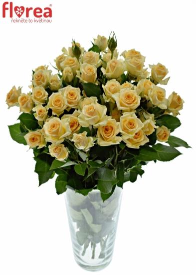 Oranžová růže TRINITY 40cm/3+