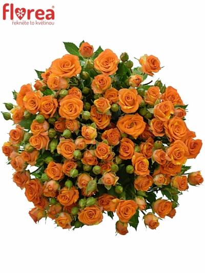 Oranžová trsová růže SMASHING 40cm/3+