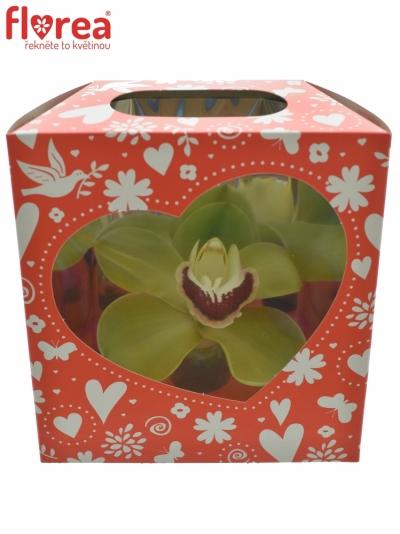 Orchidej BOX MIX