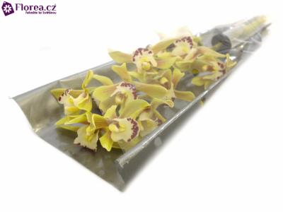 Orchidej BRIDGET 40cm