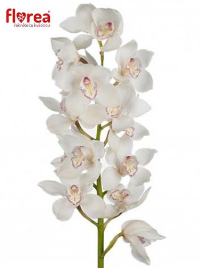 Orchidej T DOS PUEBLOS