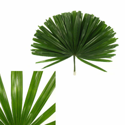 PALM RHAPIS CUTTED 40cm