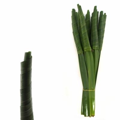 PANDANUS ROLL GREEN