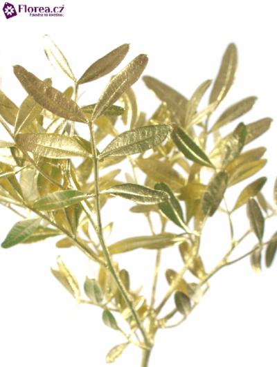 PISTACHE GOLD 40cm