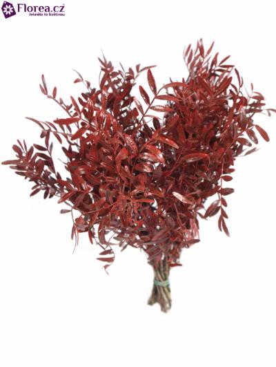 PISTACHE RED 40cm