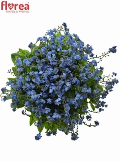 Pomněnka BLUE