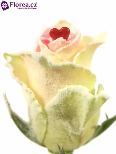 ROSA ATHENA SUGAR LOVE 50cm (M)