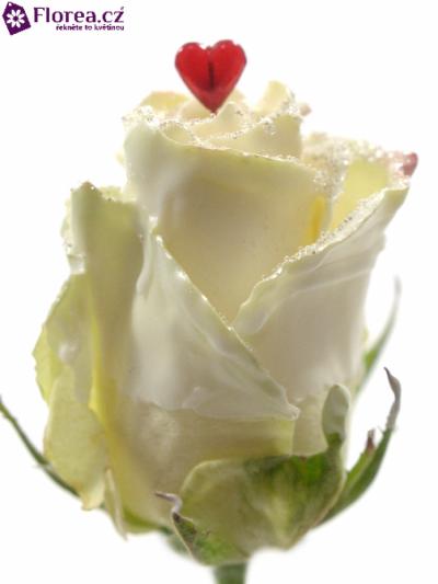 ROSA CHOCOLAT WHITE LOVE GLITTERS 50cm (L)