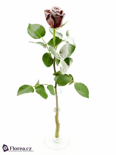 Fialová růže AMALIA FROST 50cm