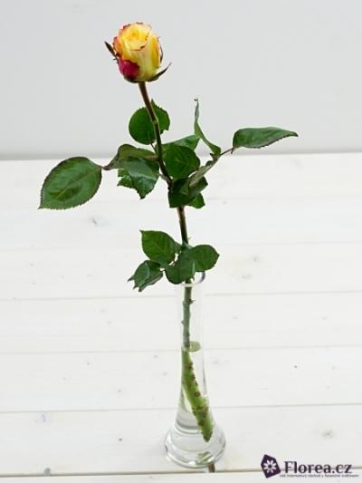 Žlutá růže AUBADE 70cm