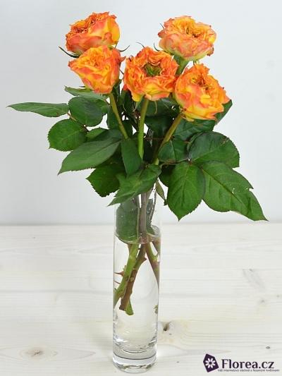 Oranžová růže CABANA RED 40cm