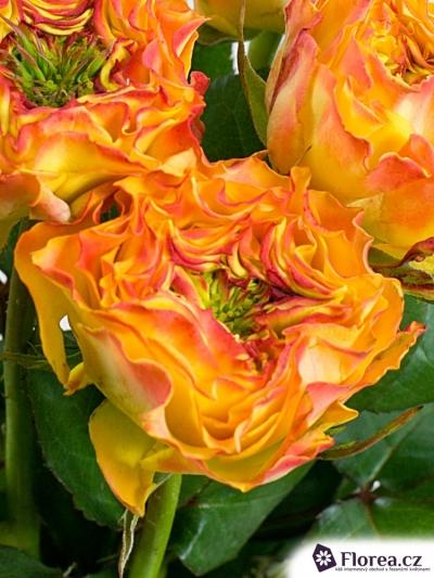ROSA CABANA RED 35cm