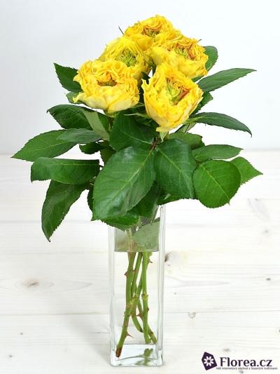 Žlutá růže CABANA YELLOW 35cm