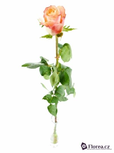 Oranžová růže CABARET 70cm