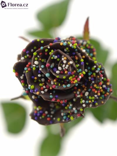 Bílá růže CHOCOLAT DISCO 60cm
